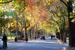 파일:external/upload.wikimedia.org/Avenue_in_Tsinghua.jpg