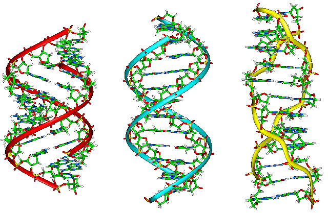 파일:external/upload.wikimedia.org/A-B-Z-DNA_Side_View.png