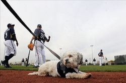 파일:external/cdn.rsvlts.com/Hank-The-Dog-Milwaukee-Brewers-010.jpg