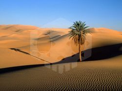 파일:external/365dailyknowledge.files.wordpress.com/sahara_desert.jpg