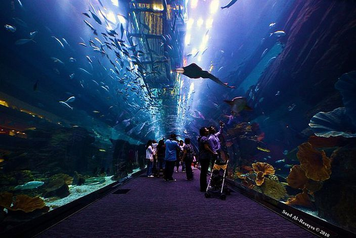 파일:external/www.conservationinstitute.org/Dubai-Mall-Aquarium-saad-S-Al-Resayes-Flickr.jpg