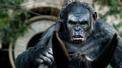 파일:external/hdwallpaperbackgrounds.net/Koba-Dawn-of-the-Planet-of-the-Apes-Wide-Wallpapers.jpg
