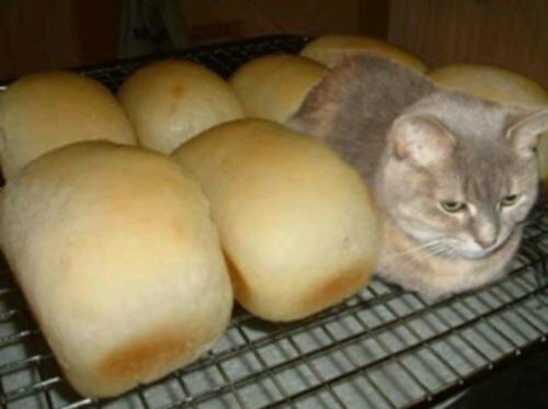 파일:attachment/cat-bread2.jpg